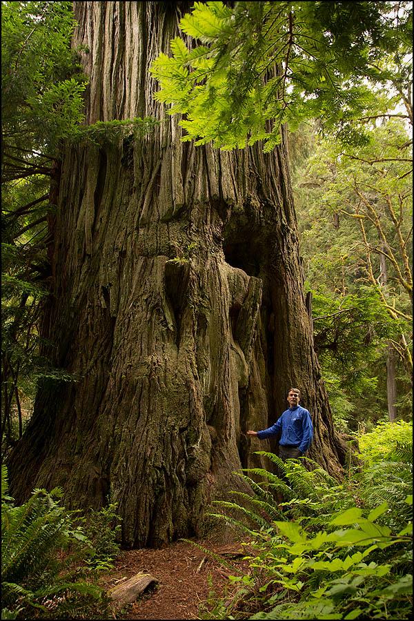 IMAGE: http://photos.imageevent.com/mdvaden/redwoods/Visser_17_600.jpg