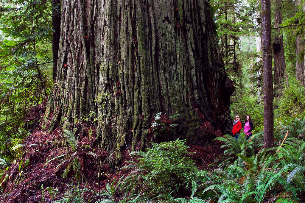 IMAGE: http://photos.imageevent.com/mdvaden/redwoods/huge/Grogan_KH_AM_12mdv.jpg