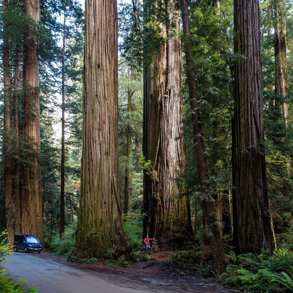 IMAGE: http://photos.imageevent.com/mdvaden/redwoods/huge/HHG_Van_2000mdv.jpg