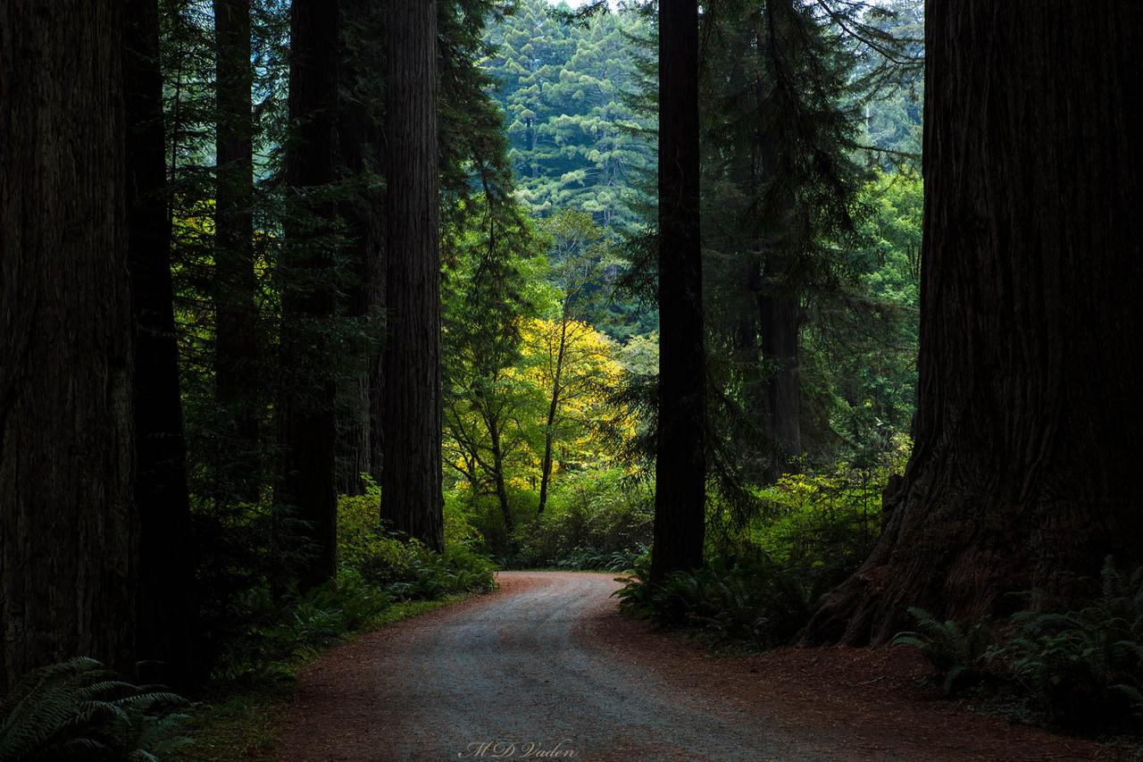 IMAGE: http://photos.imageevent.com/mdvaden/redwoods2/giant/Cal_Bar_1800mdv.jpg