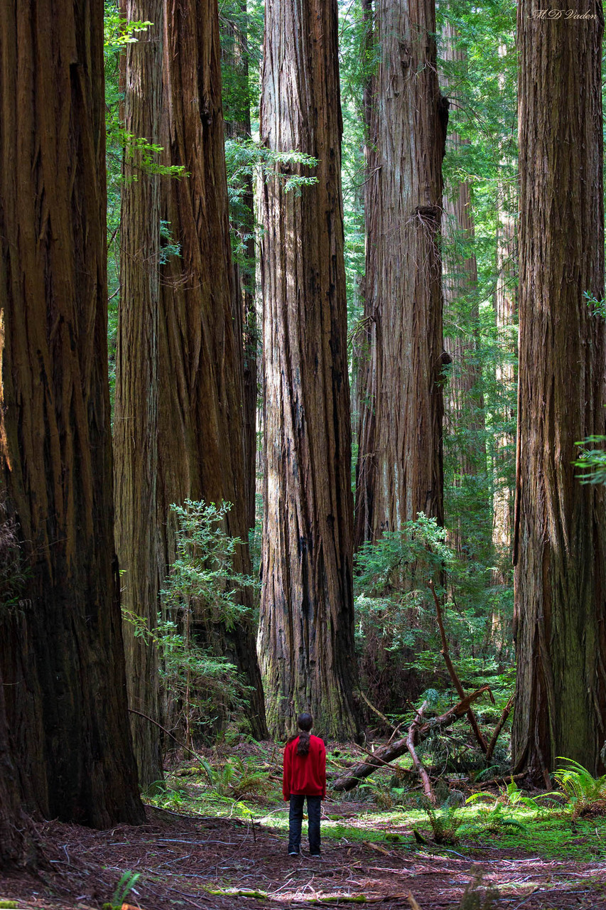 IMAGE: http://photos.imageevent.com/mdvaden/redwoods2/giant/Child_Red_1200mdv.jpg
