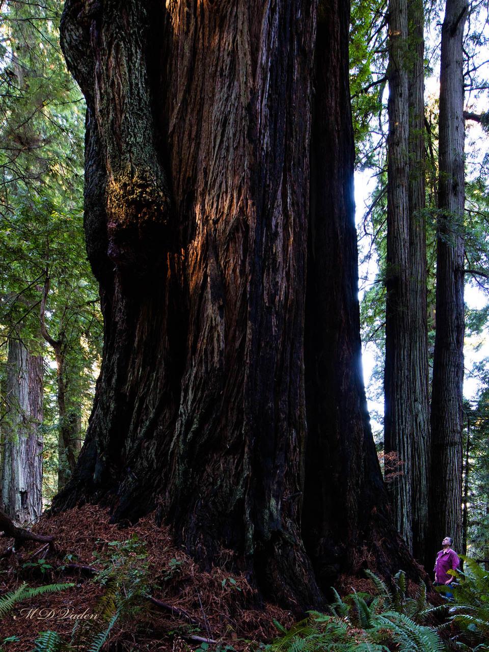 IMAGE: http://photos.imageevent.com/mdvaden/redwoods2/giant/Darth_Vader_12mdv.jpg
