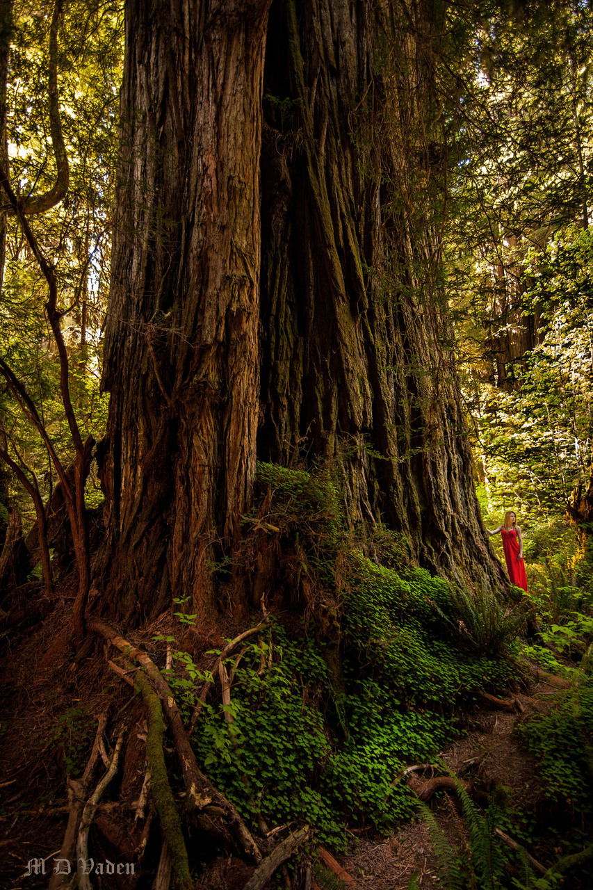 IMAGE: http://photos.imageevent.com/mdvaden/redwoods2/giant/LOST_Ver_3_1200.jpg