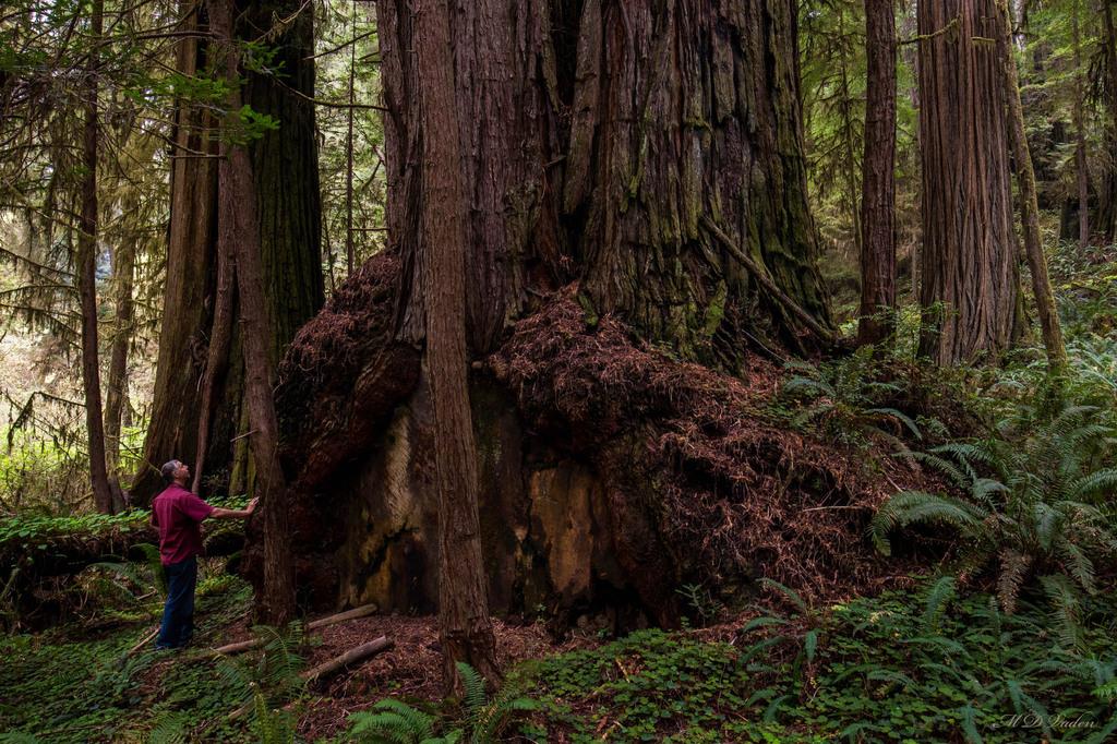IMAGE: http://photos.imageevent.com/mdvaden/redwoods2/huge/Burl_Olympian_Grv.jpg