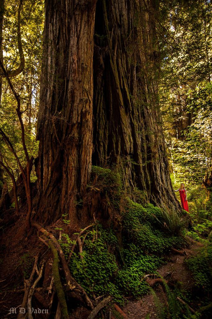 IMAGE: http://photos.imageevent.com/mdvaden/redwoods2/huge/LOST_Ver_3_1200.jpg