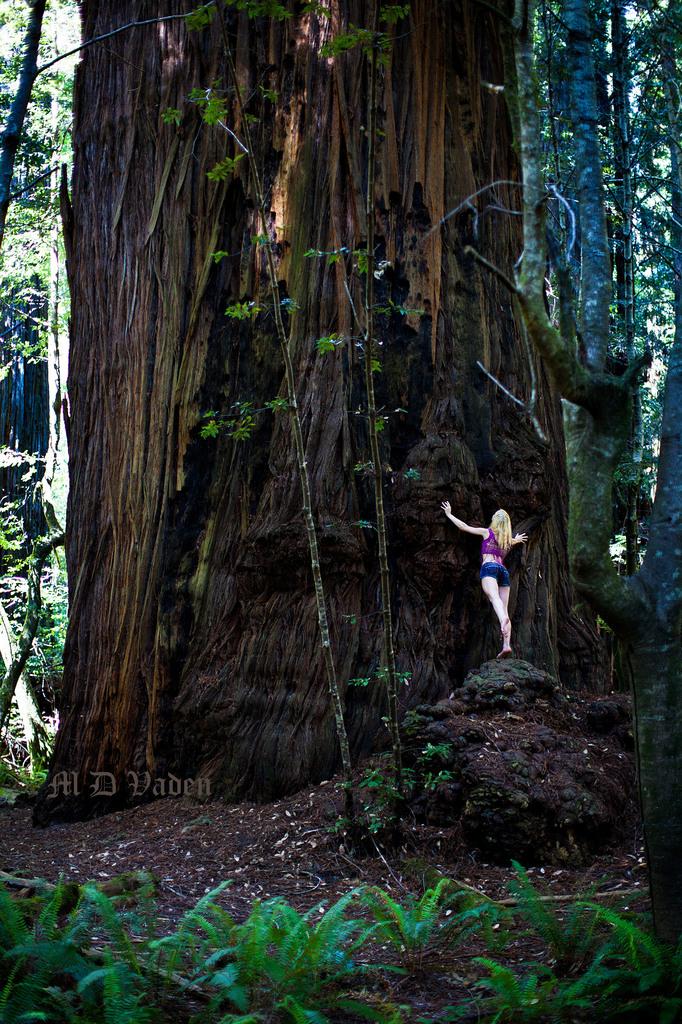 IMAGE: http://photos.imageevent.com/mdvaden/redwoods2/huge/Melkor_2_1200.jpg