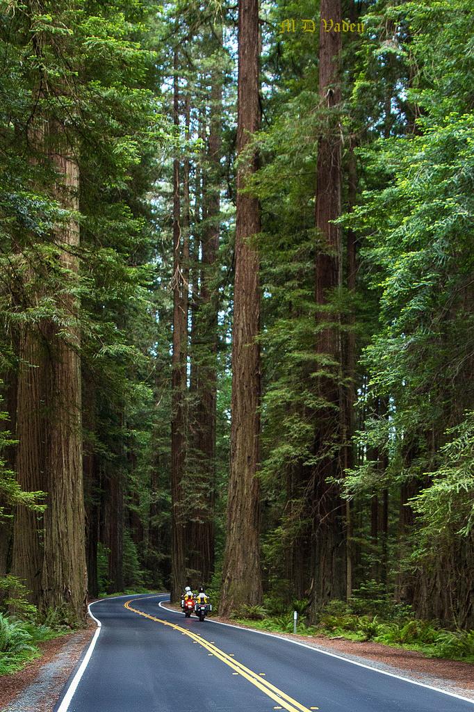 IMAGE: http://photos.imageevent.com/mdvaden/redwoods2/huge/Motorcycle_B_1200mdv.jpg