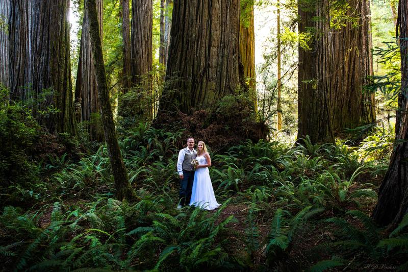 IMAGE: http://photos.imageevent.com/mdvaden/redwoods2/large/M_J_23_1600mdv.jpg