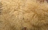 tibetian lambskin