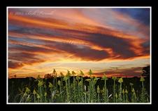 Texas Wildflowers, 2013