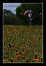 Texas Wildflowers, 2015