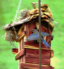 CEDARICE BIRDHOUSES & More