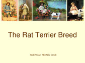 JUDGE'S EDUCATION on the Rat Terrier