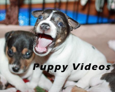 PUPPY VIDEOS