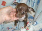 Pups Born 6/14/13