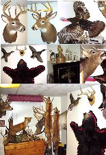 Taxidermy mounts
