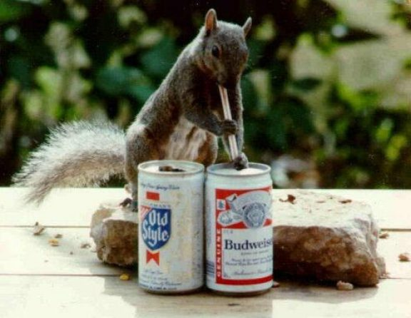 (Spoof) Problem: Drinking Beer Along The Trails! Squirrel