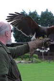 Sussex Falconry Centre