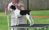Apple Valley Rat Terrier Show
