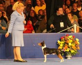 2014 AKC National dog show