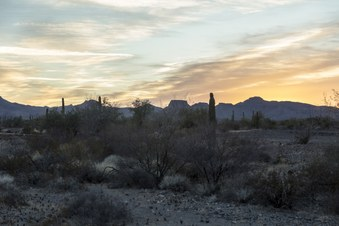 Palm Canyon - Arizona desert 01-27-2018