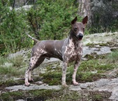 Eros (CH Grand Animal Eros @ Sarantais)