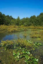 Public Gallery Photo Of the Day -- The Great Swamp