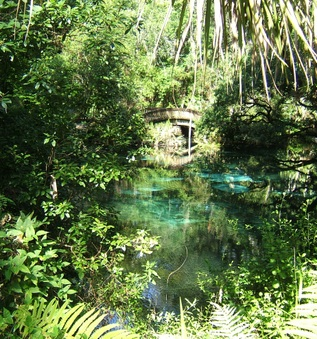Juniper Springs July 2012