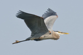 Sandhill Cranes and other wildlife