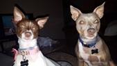 Past Puppies!