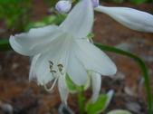 Flowers for Hostapix