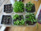 Seedlings - 2007