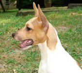 Valaurora Rat Terriers Folder