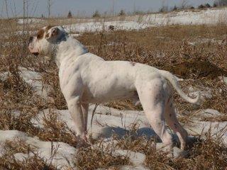 http://photos.imageevent.com/voodooambull/winter09/small/PossomDay009.jpg
