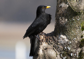 Public Gallery Photo Of the Day -- Blackbird