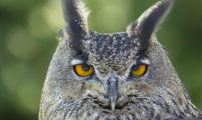 OWL%20multistack29smartobject%20median%2