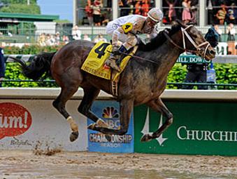 Kentucky Derby Winners Litter !!!!
