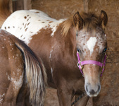 Foals of 2015