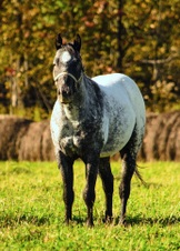 2016 POA  Foals
