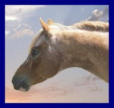 POA Ponies