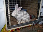 2 Rescued Rabbits