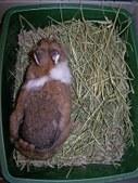 Daisy ~ stray rabbit