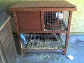 Outdoor Hutch: Rescued Guinea Pigs