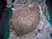 SF abandoned guinea pig (aka Sammy)