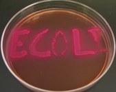 Bio 139 Lab Practical 2