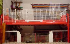 Cavy Cages - Bunk Bed Cage