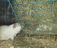 Cavy Cages - Hay Racks