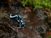 ' . substr('//photos.imageevent.com/chuck/pets/herps/poisonarrowfrogs/icons/www_auratus01_2003_06.jpg', strrpos('//photos.imageevent.com/chuck/pets/herps/poisonarrowfrogs/icons/www_auratus01_2003_06.jpg', '/') + 1) . '