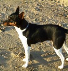 Planned breedings for 2012
