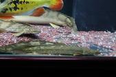 20110606MyFishes